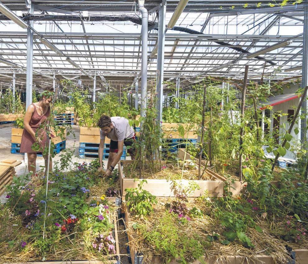 Village solidaire des 5Ponts - Nantes // La ferme urbaine